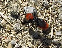 Name: 054-2.jpg