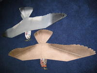 Name: Peregrine EPP pictures 12-08 015.jpg