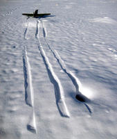 Name: IMG_3733.jpg