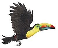 Name: toucan.jpg