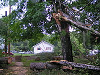 Name: tree too 007.JPG