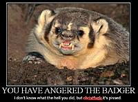 Name: Badger-Angry.JPG