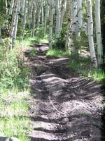 Name: pets 152.jpg