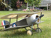 Name: 03 Bee.jpg