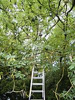 Name: 2010_06270178.jpg