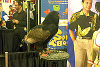 Name: Show 12.jpg