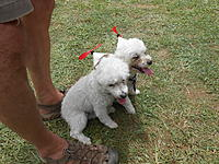 Name: DSCN2898.jpg