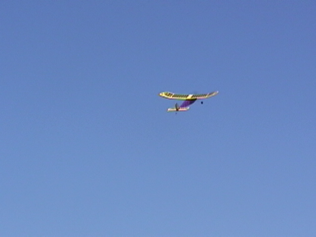 Name: seagull_008.jpg