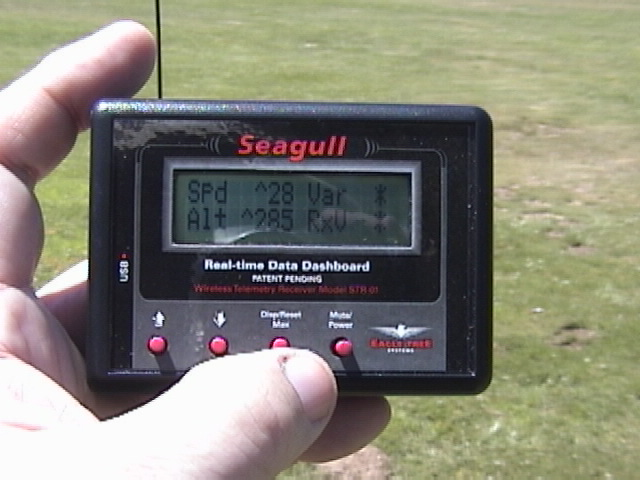 Name: seagull_010.jpg