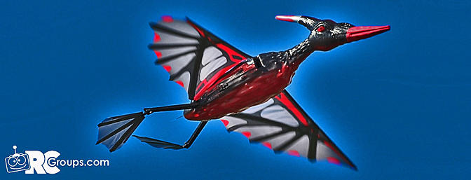 HobbyKing's Rocsky Pterodactyl Ornithopter EPP Composite 1300mm RTF Review