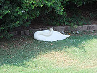Name: DSCF0596.jpg