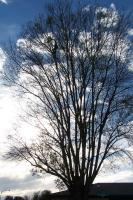 Name: 100_3230.jpg