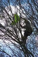 Name: 100_3231.jpg