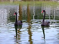 Name: AP1030357.JPG