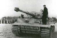 Name: tiger73.jpg