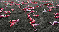 Name: Flamingo.jpg