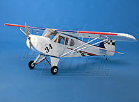 Name: Clipped-Wing-Cub.jpg