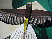 Name: My Eagle 005.jpg