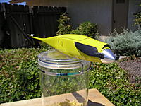 Name: Shrike Fuselage painted 002.JPG