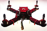 Name: Rexless-G10-258-1.jpg