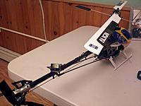 Name: trex4.jpg