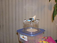 Name: Quadcopter 003.jpg