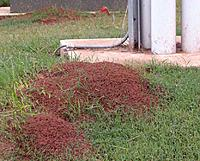 Name: ant_mounds.jpg
