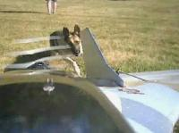Name: Brutus Chase.jpg