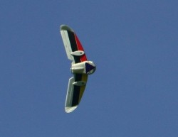 Name: IMG_0388_crop1_sm3.jpg