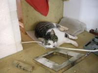 Name: DSCN0273.jpg