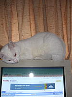 Name: DSCF4346.jpg
