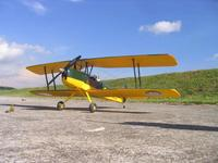 Name: tigermoth 1.jpg