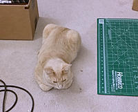 Name: ww-06.jpg