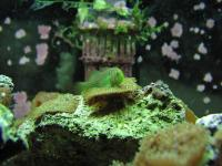 Name: aquarium-09.jpg