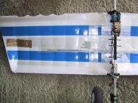 Name: underside of wing.jpg