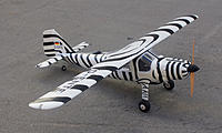 Name: Do 27 Zebra.jpg