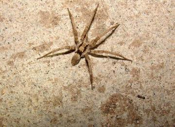 Name: Six-Legged-Spider_photo_medium.jpg