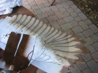 Name: 6 top feathers - brown.jpg