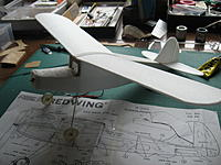 Name: Redwing 015.jpg