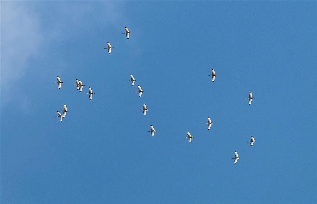 Flock of birds (Storks?) way up there! Saw these guys up above the DHLG's,  Bear in mind, I'm using a 300mm lens (450mm in 35mm terms) and this picture is cropped down by 1/2. So they be way up there!