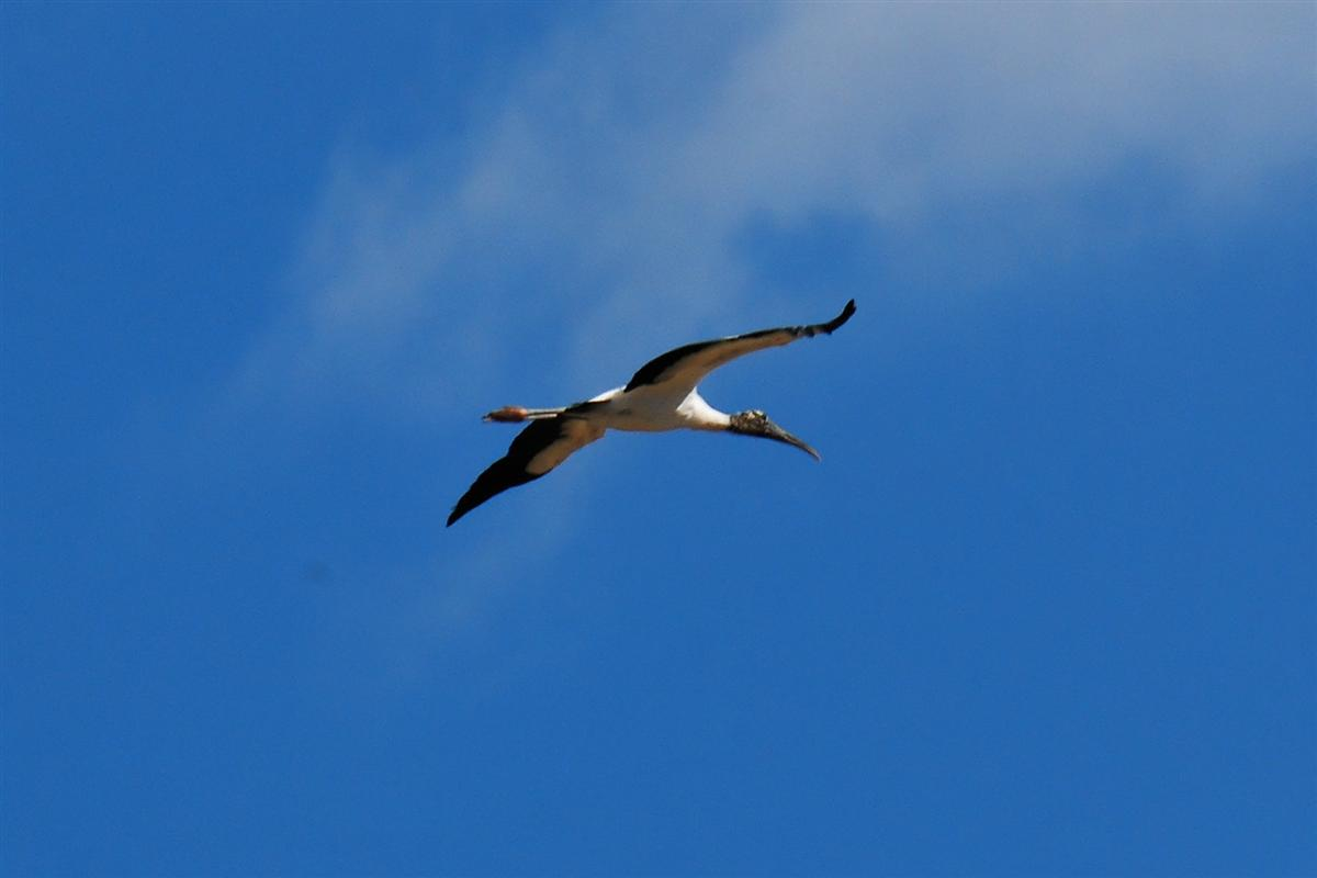 Stork flies into the flight pattern.