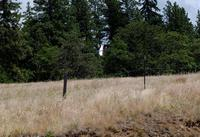 Name: DSC_0305_DxO_raw (Large).jpg