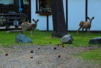 Name: DSC_0559_DxO_raw (Large).jpg