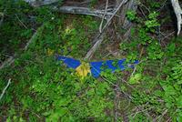Name: DSC_0745_DxO_raw (Large).jpg