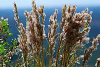 Name: DSC_0119_DxO (Custom).jpg