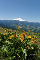 Name: DSC_0738_DxO.jpg