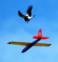 Name: m1.jpg
