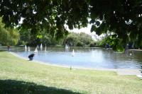 Name: a view of the pond 1.jpg
