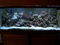 Name: DSCN1309.jpg