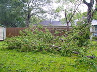 Name: P1280476.jpg